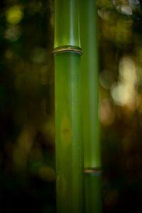 Bamboo stalk.