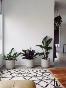 Row of three plants.